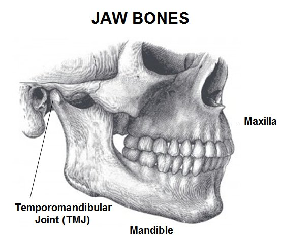Jaw Mouth 27